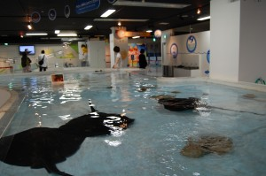 pool with mantas and sharks