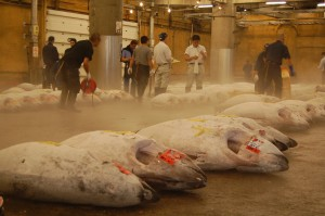 fish market at 6 a.m.-it's late!